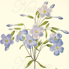 lovely vintage blue flower, upcycled into a modern print