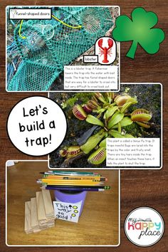 Show examples of real-life traps to help your students come up with plans for building their own leprechaun traps this St. Kindergarten Social Studies, Kindergarten Activities, Teaching Themes, Teaching Resources, Leprechaun Trap, Lobster Trap, Class Activities, Arts And Crafts Supplies, Early Childhood