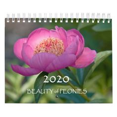 Shop 2020 Beauty of Peonies Calendar created by JennyRainbow. Gifts For Family, Gifts For Her, Peony Flower, Flowers, Event Template, Buy Art Online, Holidays And Events, Fine Art Photography, Peonies