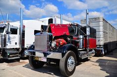 Peterbilt Cattle Hauling | 4 State Trucks home of the Chrome Shop Mafia