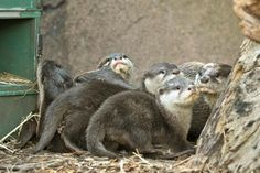 Otters are just adorably wonderful