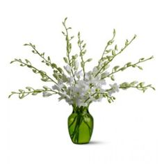 A bouquet of 10 white dendrobium orchid stems is delivered in a green glass vase.