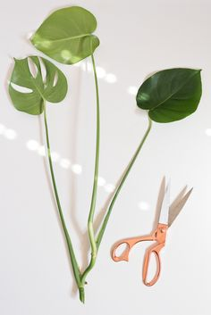 How to propagate plants in 3 easy steps. Who knew it was so simple to get new plants from ones you already have in your home? #houseplant #propagation #plants