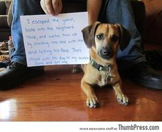 Dogs with Notes: The best of Dog Shaming (50 Funny Pictures)