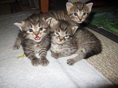 It's like a little kitten, Wait, It is a little kitten.