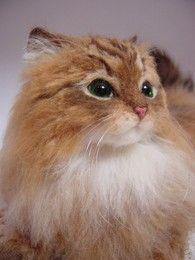 This cat is amazing.