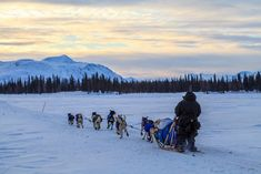 Alaska Winter Tour: Anchorage | Iditarod Sled Dog Race Start | Meet Mushers Anchorage Hotels, Alaska Winter, Alaskan Vacations, Alaska Northern Lights, Visit Alaska, Alaska Travel, Winter Travel, Day Tours