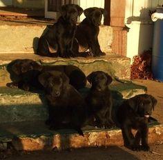 A Rescue Story! 7 Beautiful Babies   Coupaw.com