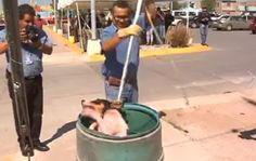 Quick links to share the petition: Find other methods of curing rabies in Juarez, Mexico! | Yousign.org
