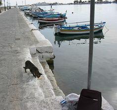 #Pythagorio, Samos - Cat - statue...  Like,Repin,Share, Thanks!