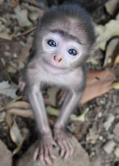 Ready for my close-up: The adorable baby grey langur monkey showed he was not camera shy when pictured near his Indian home
