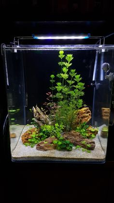 Fabulous Amazing Tips Your New Aquarium Decorations Fabulous Amazing Tips Your New Aquarium Decorations,Aquascaping Betta Aquarium, Aquarium 20l, Aquarium Terrarium, Tropical Fish Aquarium, Aquarium Setup, Tropical Fish Tanks, Aquarium Design, Planted Aquarium, Aquarium Landscape