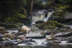 Spirit Bear Adventures - Visit the Great Bear Rainforest!