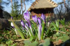 Wiosna zawitała do Białostockiego Muzeum Wsi!
