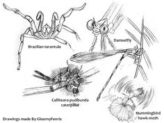 Insects, Arachnids, & Bugs
