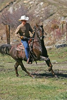 Ranch Horses How To Stock Your Ranch Ranch Horses For Sale in Colorado--Colorado Ranches For Sale Hot Cowboys, Real Cowboys, Cowboys And Indians, Cowgirl And Horse, Cowboy Up, Cowboy And Cowgirl, Cowboy Ranch, Western Riding, Western Art