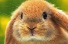 <b>Bunnies are actually GIF royalty.</b> We owe them everything.