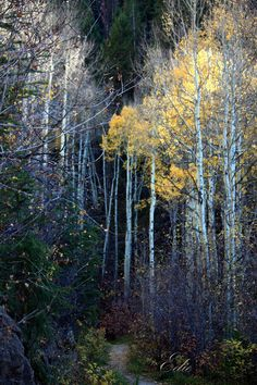 ✮ EagleVail to Beaver Creek