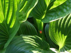 ladybug-beetle-plant-ornamental-plant-66289.jpeg (3840×2880)
