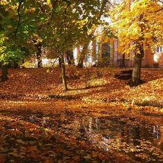 #jeszczejesien #autumn #autumninthecity #autumncolors #autumnleaves #zlotapolskajesien #oliwa #gdanskiekadry #gdanskiekadry_oliwa #gdansk #parkoliwski #igersgdansk ##igerspoland #mobilnytydzien104 #trees #lubiepolske #ourpoland