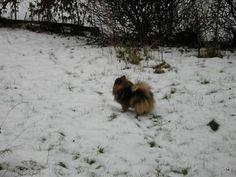 ... juhu... es hat geklappt ... Schneeflocken und Eichhörnchen und ... ich komme !!! wuff wuff wuff