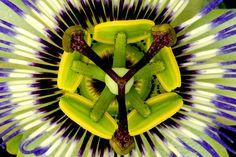 http://esmesanbona.hubpages.com/hub/How-to-Interpret-Stars-as-Dream-Symbols