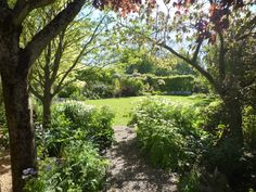 Ideal for a teddy bear's picnic! NGS Gardens open for charity - Garden