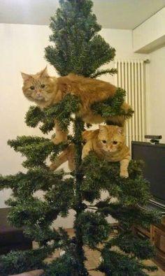 paper faces: Kedilerin Yılbaşı Ağacı İle İmtihanı!