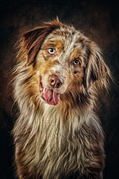 This is my dream dog. A muddy aussie. Beautiful but not afriad to get mud under the fingernails.
