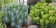 やってみよう! 初めてのガーデニング。【入門編】宿根草のカラーリーフ5選 - GardenStory (ガーデンストーリー) Exterior, Plants, Gardening, Lawn And Garden, Plant, Outdoor Rooms, Planets, Horticulture
