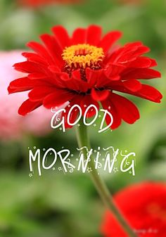 Free Good Morning Images, Good Morning Cards, Good Morning Picture, Good Morning Greetings, Good Morning Good Night, Good Morning Wishes, Happy Morning, Morning Pics, Happy Sunday
