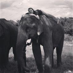 #thailand #ruammitvillage #elephant #majestic