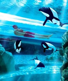 Sea World Orlando Florida (Best Honeymoon Destinations In USA) | BestHoneymoonDestinationss.blogspot.com