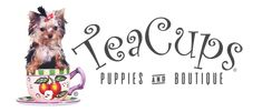 Browse toy teacup puppies for sale at TeaCups Puppies and Boutique of South Florida! Specializing in toy teacup micro puppies for sale in Florida since Teacup Yorkie For Sale, Pomeranian Puppy For Sale, Chihuahua Puppies For Sale, Teacup Puppies For Sale, Dachshund Puppies, Frenchie Puppies, Teacup Pomeranian, Biewer Yorkie, Yorkies