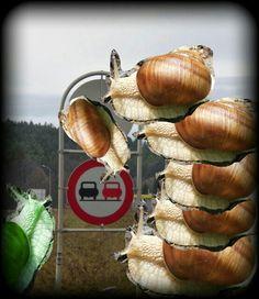 Onion, Vegetables, Food, Onions, Essen, Vegetable Recipes, Meals, Yemek, Veggies