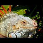 10 weird animal defense mechanisms