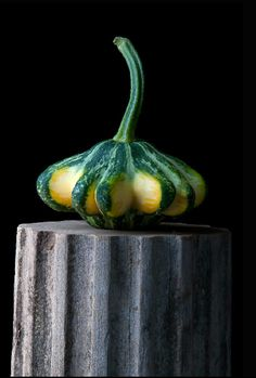 'Flying Saucer Squash' by American photographer Lynn Karlin. via Gallery on the Green