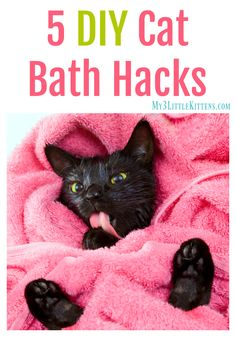 5 DIY Cat Bath Hacks. The How To Behind Giving Your Cat a Bath!