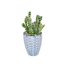 """4"""" Cactus in Porcelain Vessel - Faux Arrangements (110 CAD) ❤ liked on Polyvore featuring home, home decor, decorative accessories, floral home decor and cactus home decor"""