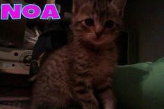 Soy Noa, una gatita dulce y cariñosa que nací a mediados de abril de 2013. Me gusta mucho jugar y estar con la gente. Como sola y sé usar el arenero. ¡Adóptame!