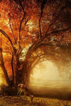 swansong-willows:  (via Pinterest)