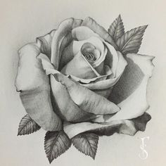 Everything finished with this rose, it's my favorite that I've drawn so far … - diy tattoo project Rose Tattoos, Flower Tattoos, Body Art Tattoos, Tatoo Rose, Tatoos, Drawing Sketches, Art Drawings, Drawing Drawing, Drawing Tips