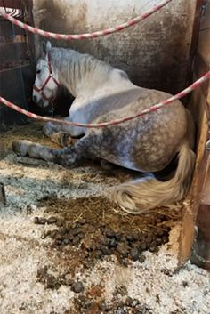 """City Inspector Reports Carriage Horse Stalls as Abusive. New York City – A city building inspector was so worried about the living condition of a carriage horse that he snapped a photo and reported it as animal abuse.  """"The stable is filthy. It's tiny. The horse almost can't even stand up in there,"""" the anonymous inspector told The Post.  He went on to say """"The stable looked like it hadn't been cleaned in years. It got so crammed up that the horse would have a hard time getting up."""""""