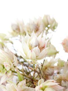 Photobooth in Blush und Burgundy selber machen – Elegante Hochzeit Teil 3 | Blumigo Hot Pink Flowers, Blush Flowers, Love Flowers, Winter Flowers, Seasonal Flowers, Spring Flowers, Diy Wedding Garland, Floral Wedding Decorations, Picture Frame Arrangements