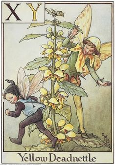Illustration for the Yellow Deadnettle Fairy from Flower Fairies of the Alphabet.  A small boy fairy with an X on the back of his waistcoat runs away to the left from a boy fairy who is appearing from behind a deadnettle.    Author / Illustrator  Cicely Mary Barker