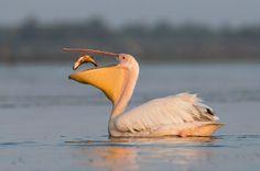 Break(fast) » Focusing on Wildlife