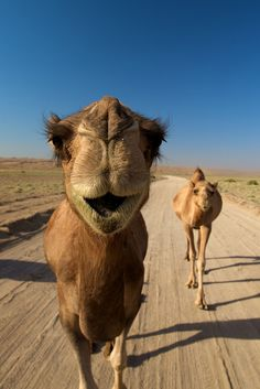 In the desert (by _skynet)
