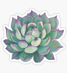 """""""Succulent plant"""" Stickers by redqueenself Aesthetic Stickers, Succulents Drawing, Sketch Book, Illustration, Drawings, Stickers, Sticker Design, Art"""