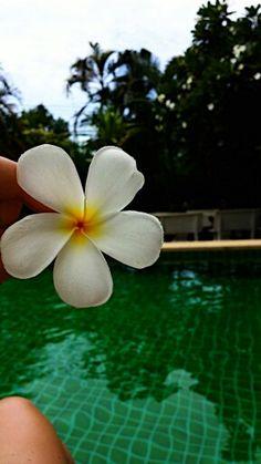 Flower, Thailand, 2014,  Amazing