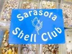 Sarasota Shell Club Annual Shell Show Palmetto, FL Seashell Art, Shell Crafts, Kids Events, 50th Anniversary, Wonderful Things, Sea Shells, Club, Driftwood, Creative